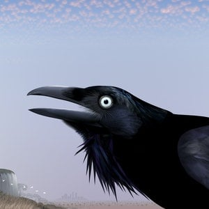 (CreativeWork) You Yangs Crow Ed. 10 of 20 by Kim Lynch. print. Shop online at Bluethumb.