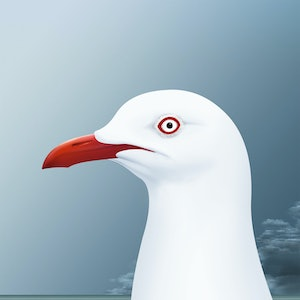 (CreativeWork) Silver Gull Ed. 10 of 20 by Kim Lynch. print. Shop online at Bluethumb.