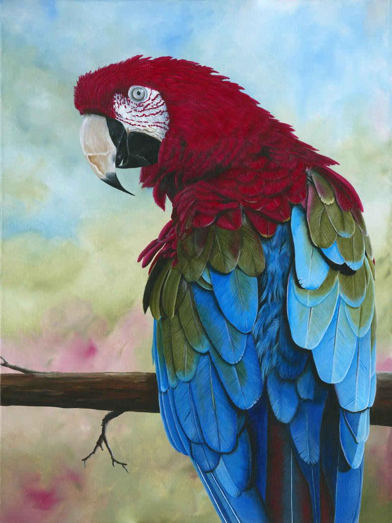 (CreativeWork) Sticky Beak - Limited Edition Giclee Print Ed. 1 of 100 by Debra Dickson. print. Shop online at Bluethumb.