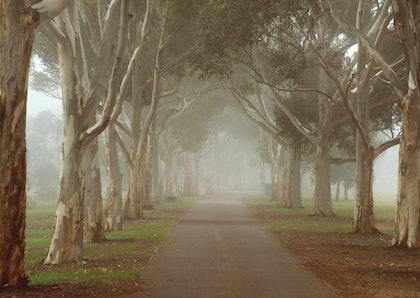 Morning Fog in the Parklands