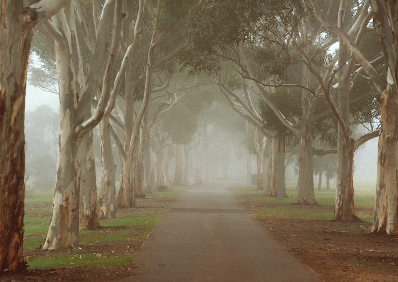 (CreativeWork) Morning Fog in the Parklands by Alex Frayne. photograph. Shop online at Bluethumb.
