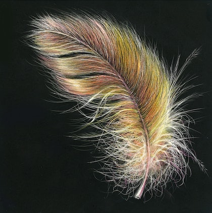 (CreativeWork) Fluffy as a Feather by Geraldine Simmons. drawing. Shop online at Bluethumb.