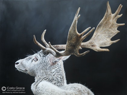 "(CreativeWork) ""Mythical"" Albino Fallow Deer  by Carla Grace. arcylic-painting. Shop online at Bluethumb."