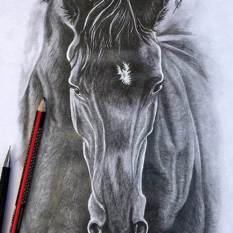 (CreativeWork) Graphite Horse Study 1 by Racheal Davis. Drawings. Shop online at Bluethumb.