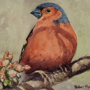 (CreativeWork) Chaffinch by Peter Macdonald. watercolour. Shop online at Bluethumb.