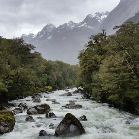 (CreativeWork) Milford Sounds - river-view Ed. 1 of 10 by Jillian Annand. Print. Shop online at Bluethumb.