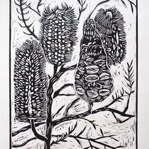 (CreativeWork) Banksia linocut  Ed. 5 of 20 by Matthew Broughton. Print. Shop online at Bluethumb.