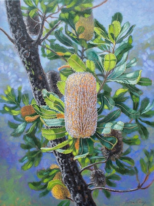(CreativeWork) Blue Mountains Banksias 2 by Fiona Craig. Oil Paint. Shop online at Bluethumb.
