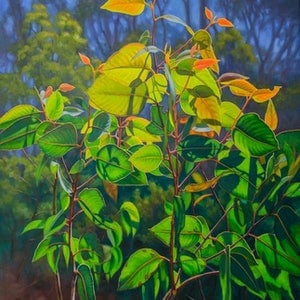 (CreativeWork) Sunlit Gumleaves 15 by Fiona Craig. oil-painting. Shop online at Bluethumb.