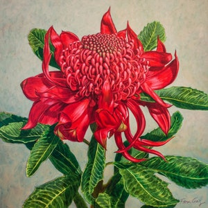 (CreativeWork) Red Waratah Beauty 1 by Fiona Craig. oil-painting. Shop online at Bluethumb.
