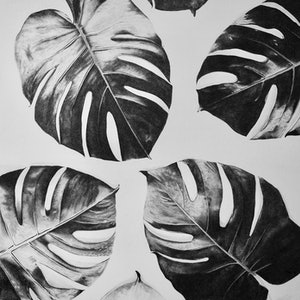 (CreativeWork) Monstera I by Claire Colvin. drawing. Shop online at Bluethumb.