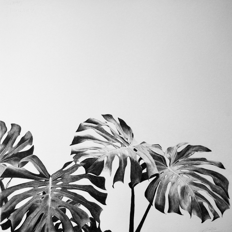(CreativeWork) Monstera II by Claire Colvin. drawing. Shop online at Bluethumb.