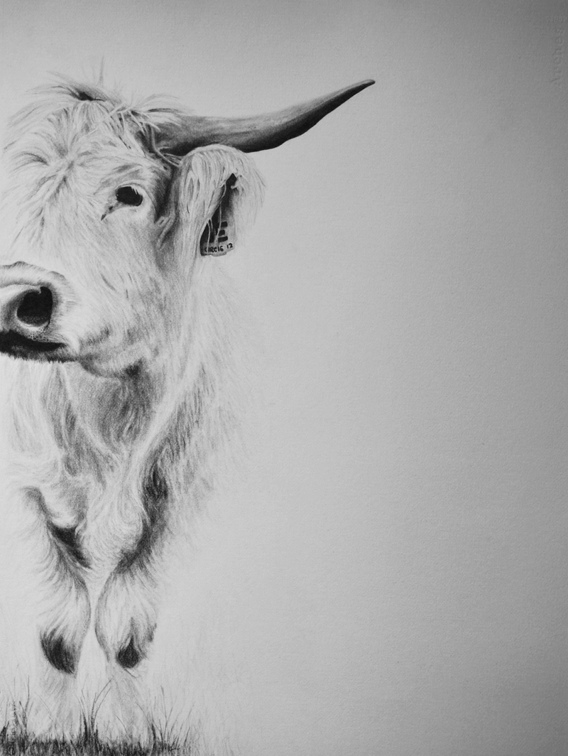 (CreativeWork) Charlotte by Claire Colvin. drawing. Shop online at Bluethumb.