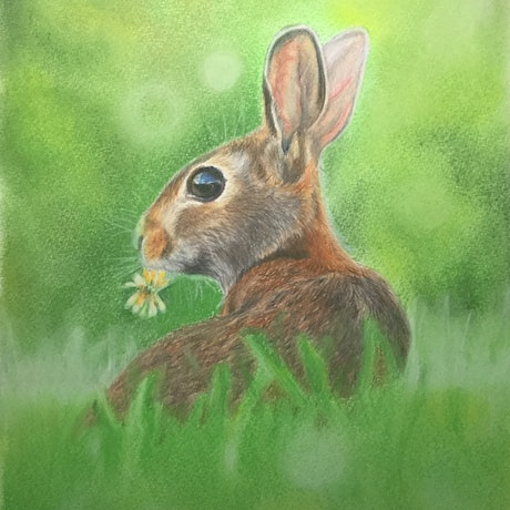 (CreativeWork) Little Rabbit by Helen Pilkington. Drawings. Shop online at Bluethumb.