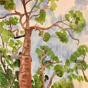 (CreativeWork) Cedar Gum by Gavin Bridge. watercolour. Shop online at Bluethumb.