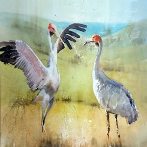 (CreativeWork) dancing brolgas by peter smart. watercolour. Shop online at Bluethumb.