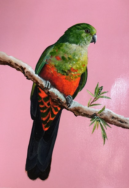 (CreativeWork) KING PARROT A3 CANVAS PAPER ORIGINAL  by HEYLIE MORRIS. arcylic-painting. Shop online at Bluethumb.