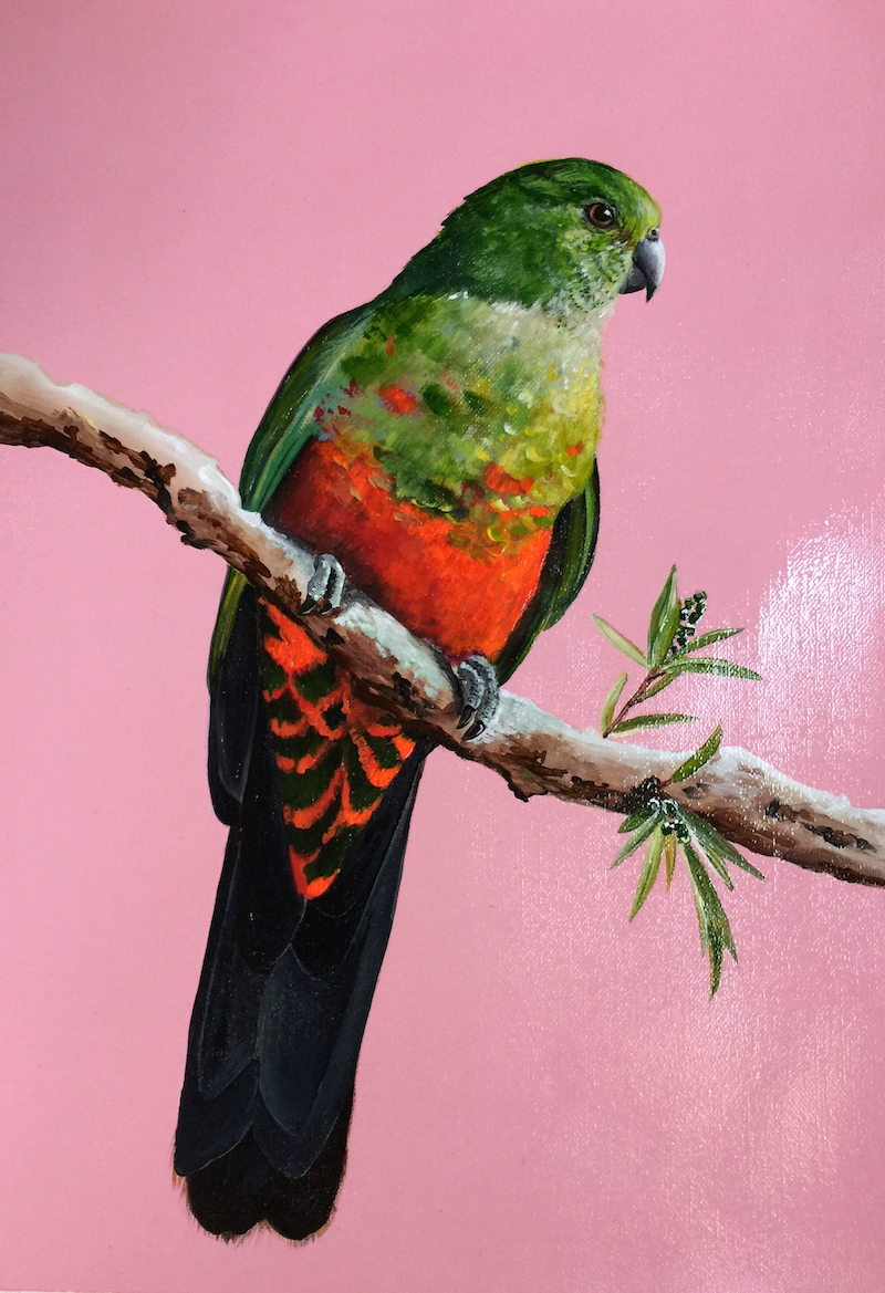 (CreativeWork) KING PARROT A3 CANVAS PAPER ORIGINAL  by HEYLIE MORRIS. Acrylic Paint. Shop online at Bluethumb.