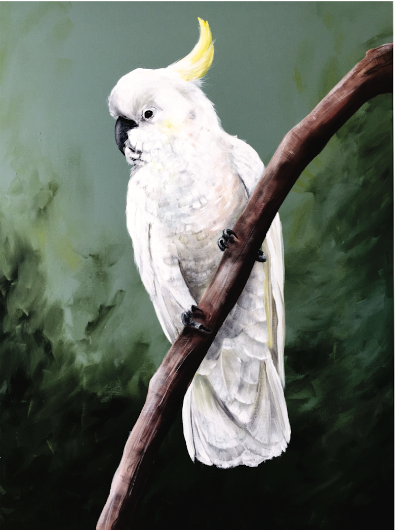 (CreativeWork) Cheeky Sulphur  Crested Cockatoo  by HEYLIE MORRIS. arcylic-painting. Shop online at Bluethumb.
