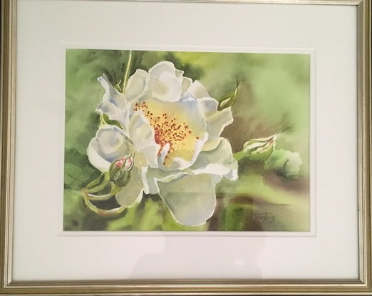 (CreativeWork) White Rose by June king. Watercolour Paint. Shop online at Bluethumb.