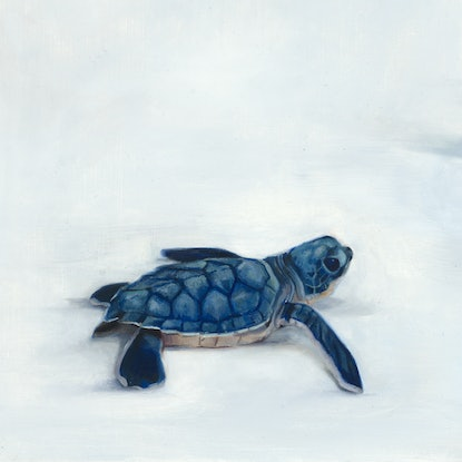 (CreativeWork) Great Barrier Reef 2 by Brooke Walker. Oil Paint. Shop online at Bluethumb.