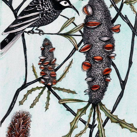 (CreativeWork) Banksia bird by Jenny Wood. Mixed Media. Shop online at Bluethumb.