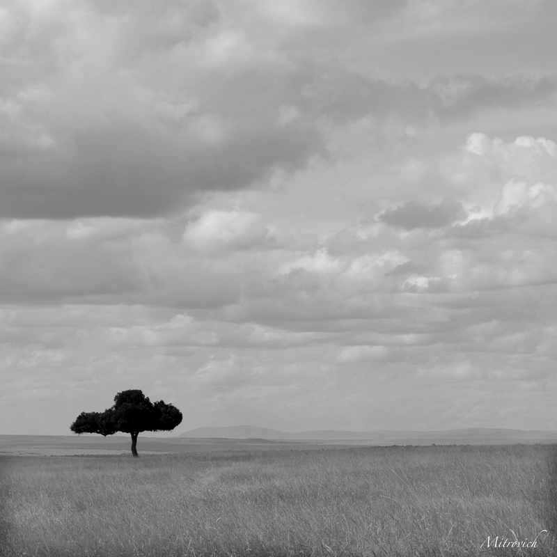(CreativeWork) Kenya study#1031 by Simon Mitrovich. photograph. Shop online at Bluethumb.