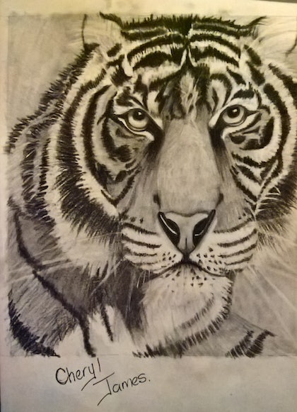 (CreativeWork) Magnificent Tiger by Cheryl James. drawing. Shop online at Bluethumb.