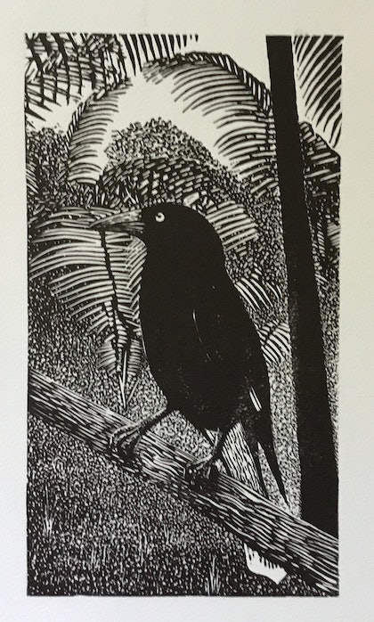 (CreativeWork) Currawong Ed. 1 of 50 by Gilbert Schultz. print. Shop online at Bluethumb.