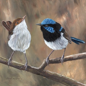 (CreativeWork) Superb Fairy Wrens by Janet Graham. arcylic-painting. Shop online at Bluethumb.