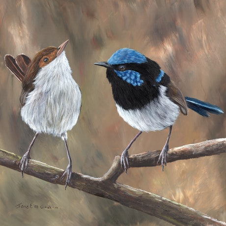 (CreativeWork) Superb Fairy Wrens by Janet Graham. Acrylic Paint. Shop online at Bluethumb.