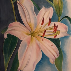 (CreativeWork) Lily by Svetlana Cook. watercolour. Shop online at Bluethumb.