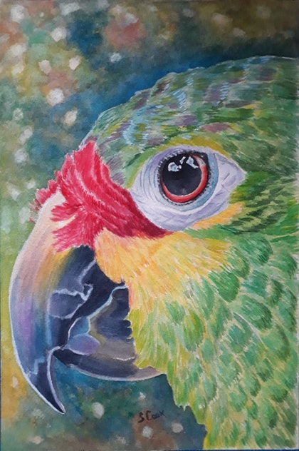 (CreativeWork) Study of parrot's head by Svetlana Cook. watercolour. Shop online at Bluethumb.