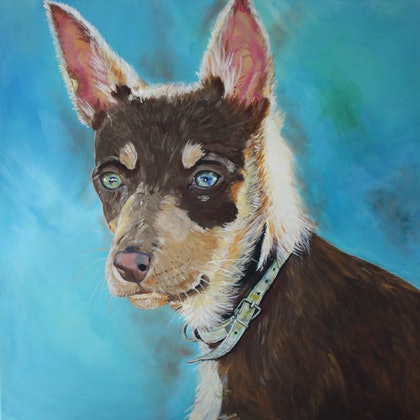 (CreativeWork) A Kelpie named Scout by Julie Hollis. arcylic-painting. Shop online at Bluethumb.
