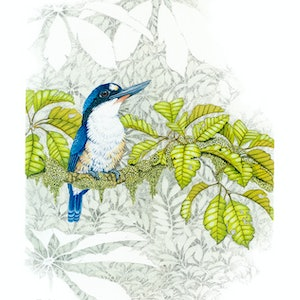 """(CreativeWork) """"Proud"""" Forest Kingfisher by David Hilton Stacey. mixed-media. Shop online at Bluethumb."""