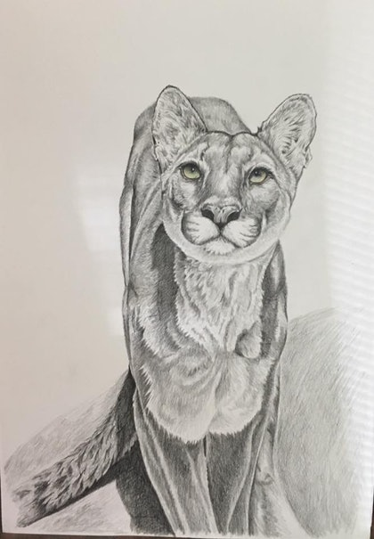 (CreativeWork) Puma unframed by Jo Coleman. drawing. Shop online at Bluethumb.