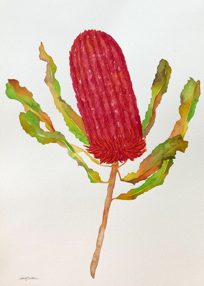 (CreativeWork) Banksia Flower by Kirsty Anderson. watercolour. Shop online at Bluethumb.