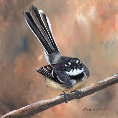 (CreativeWork) Grey Fantail by Janet Graham. Acrylic Paint. Shop online at Bluethumb.