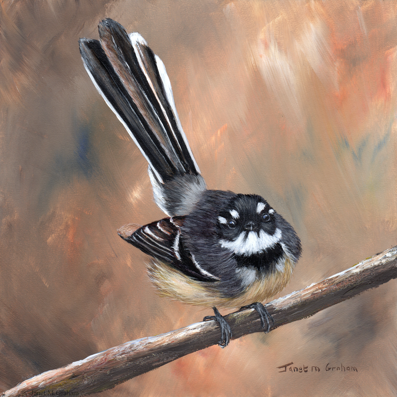 (CreativeWork) Grey Fantail by Janet Graham. arcylic-painting. Shop online at Bluethumb.