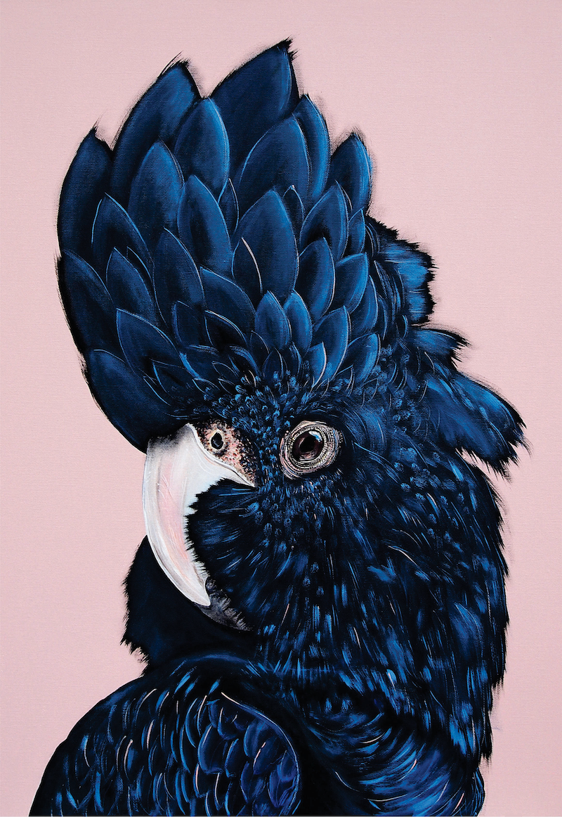 (CreativeWork) ALVA the black cockatoo  Ed. 26 of 50 by HEYLIE MORRIS. print. Shop online at Bluethumb.