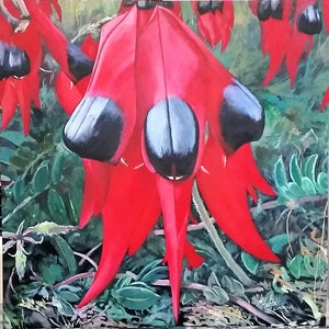 (CreativeWork) STURTS DESERT PEA-Clianthu Formosa by Margaret HADFIELD. arcylic-painting. Shop online at Bluethumb.