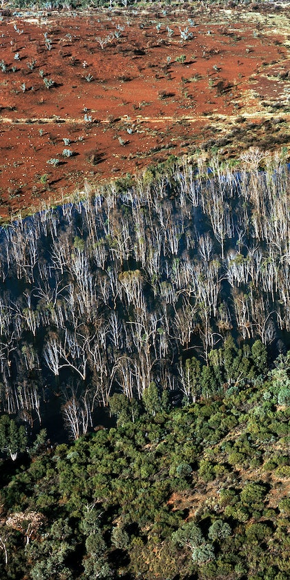 (CreativeWork) Flood Ghost Gums by Peter Radford. photograph. Shop online at Bluethumb.