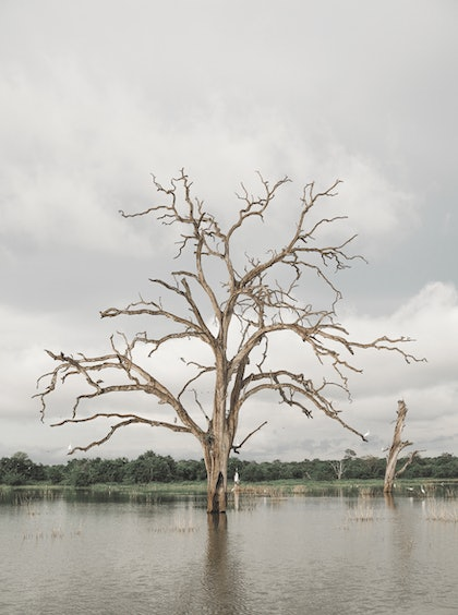 (CreativeWork) Tree Of Life by Etre Britta. photograph. Shop online at Bluethumb.