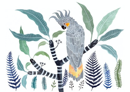 (CreativeWork) Yellow Tailed Grey Cockatoo, Frangipani and Ferns Ed. 11 of 50 by Sally Browne. print. Shop online at Bluethumb.