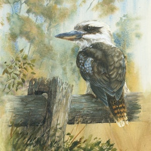 (CreativeWork) Kookaburra on Guard by Anica Amphlett. watercolour. Shop online at Bluethumb.