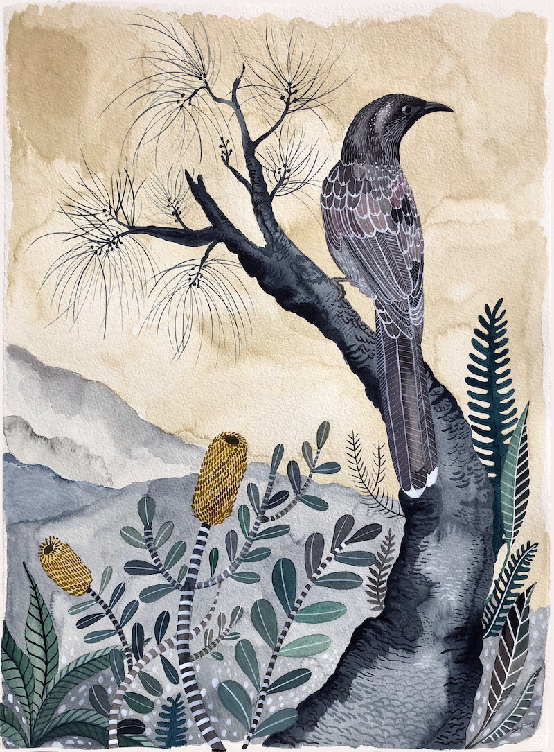 (CreativeWork) Wattle Bird with Casuarina and Coastal Banksia by Sally Browne. watercolour. Shop online at Bluethumb.