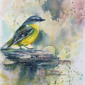 (CreativeWork) Yellow Robin by Anica Amphlett. watercolour. Shop online at Bluethumb.