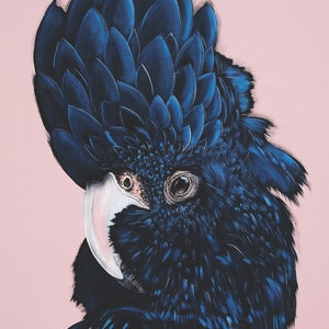 (CreativeWork) ALVA the black cockatoo  Ed. 27 of 50 by HEYLIE MORRIS. print. Shop online at Bluethumb.