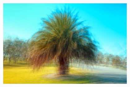 (CreativeWork) Fronds by Joseph Remi d'Argent. photograph. Shop online at Bluethumb.