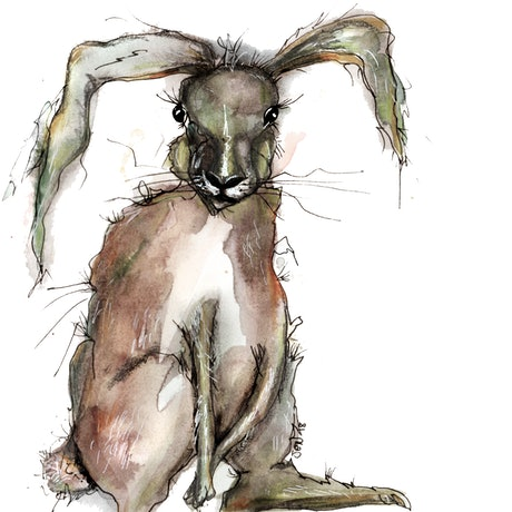 (CreativeWork) Good hare day by Jenny Wood. Drawings. Shop online at Bluethumb.